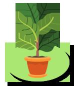 Thème Botanique